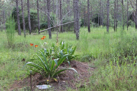 "Glendale Memorial Nature Preserve is roughly two hours west of Tallahassee, 12 miles off the interstate in DeFuniak Springs. It's where people can go for the ""green burial"" practice of burying loved ones straight into the ground without embalming fluids or caskets."