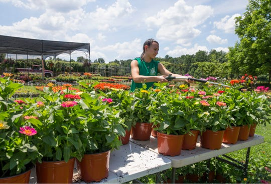 Employee Jessica Thesing waters flowers in the hot afternoon sun. The Caring Sharing Agriculture program is run between Jon and Tracey Stewart's Hockhockson Farm Foundation, Lunch Break, and Laurino Farms. Fruits and vegetables grown at the farm are donated to Lunch Break where people in need eat them. Colts Neck, NJThursday, June 27, 2019