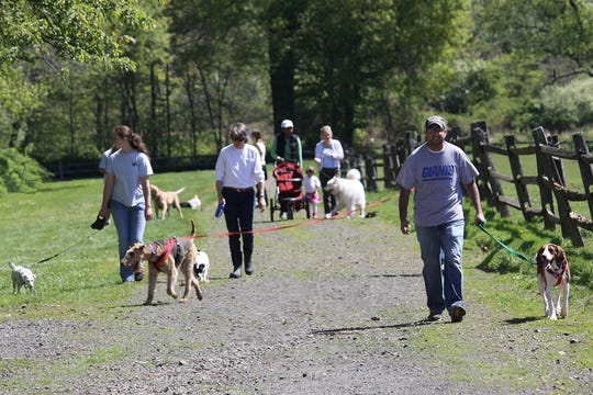 Dog walks on the trails at Lord Stirling Stable, 256 South Maple Ave.in the Basking Ridge section of Bernards, are held every Saturday morning.