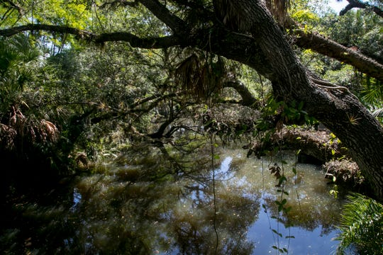 The Estero River is designated as an Outstanding Florida Waterway, but has tested high for fecal bacteria. There are no signs to warn the public.