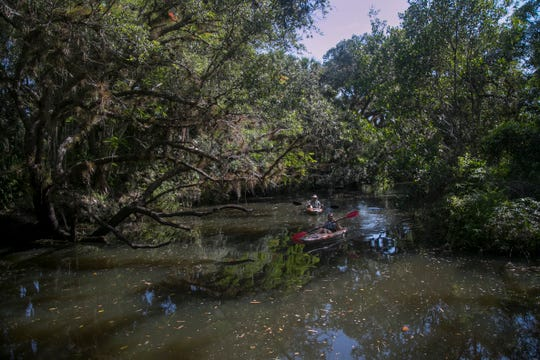Paula and Alan Enis of Columbus, Ohio, kayak down the Estero River on Thursday, June 27, 2019, in Estero. The river is designated as an Outstanding Florida Waterway, which gives it special protections.