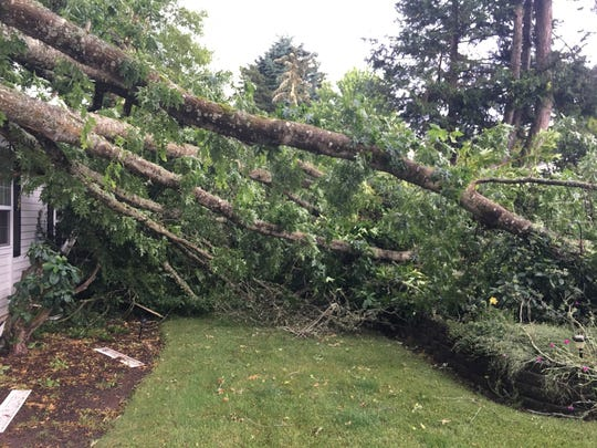 A large tree was blown over and fell on a house on Kanuku Street in South Salem on Wednesday afternoon. No one was injured, as the family was out to dinner when a sudden, violent wind and rainstorm blew through town.