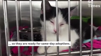 The Kitty Korner at Minnesota Highway 23 and Washington Memorial Drive is the newest place in St. Cloud for folks to adopt kittens and cats.