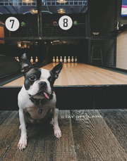 Dogs can now enjoy a night out with their humans at Pins Mechanical Co. and 16 Bit Bar + Arcade in Cincinnati.