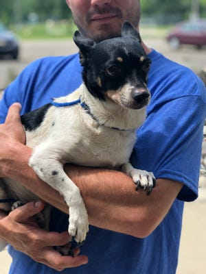 Honey after arriving at Jackson County Animal Shelter.