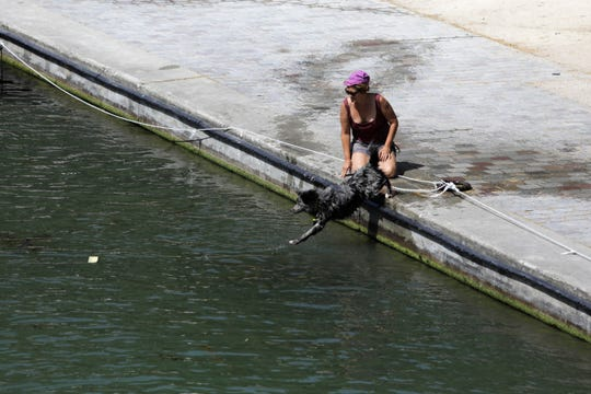 A dog jumps into the Canal de l'Ourcq in Paris, Friday, June 28, 2019. Schools are spraying kids with water and nursing homes are equipping the elderly with hydration sensors as France and other nations battle a record-setting heat wave baking much of Europe.