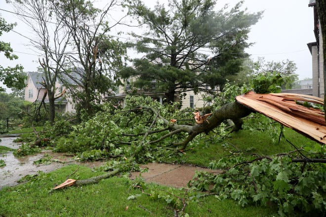 Trees remain down Friday near the 300 block of North East Avenue in Waukesha. High winds from Thursday's night's storm caused damage at Carroll University and the surrounding neighborhood.