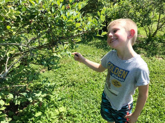 Ethan Manning, 6, enjoys a morning picking berries at Bottom View Farm in Portland, Tennessee.