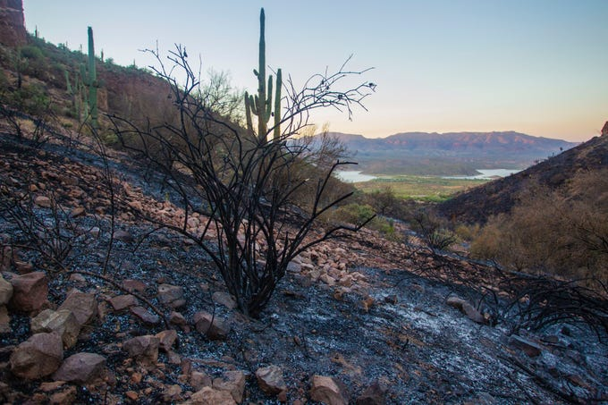 The ground is scorched at Tonto National Monument on June 27, 2019, after the Woodbury Fire came through the area.