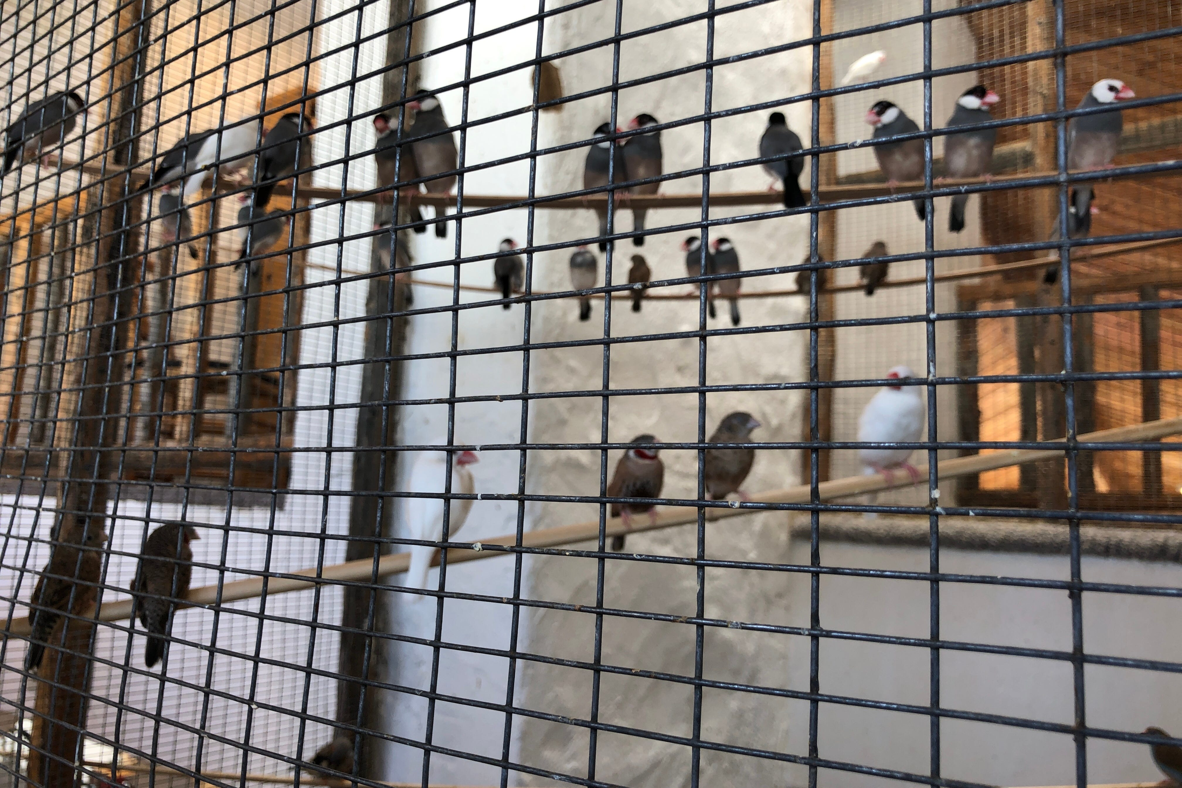 This Mesa Home Gives New Meaning To Bird House With A 2 Story Aviary