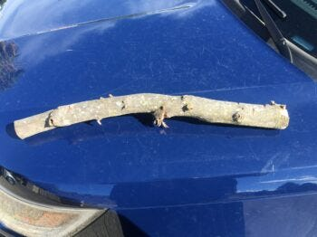 Police took a picture of part of a tree branch that officers say a Redding man was brandishing as a deadly weapon.