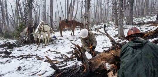 The Salamanders brought mules to help them haul equipment into a burned part of the forest.