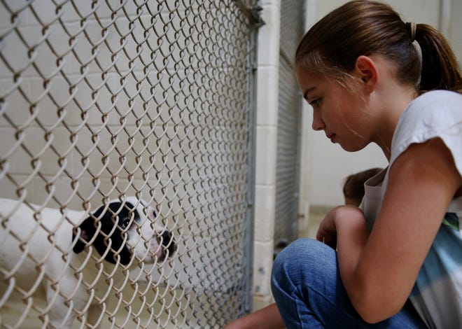 Tristin Rubio provides comfort to a dog waiting to be adopted at San Angelo Animal Services on Thursday, June 27, 2019.