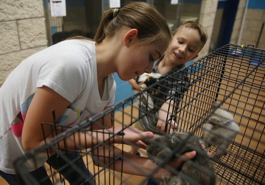 Tristin Rubio, left, and Hunter Murphy play with kittens while they work as junior volunteers at San Angelo Animal Services on Thursday, June 27, 2019.