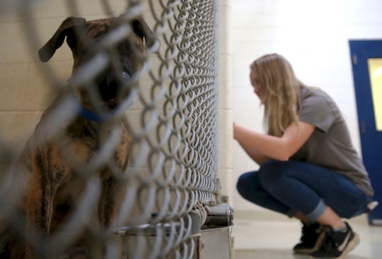 Avity Arnold provides comfort to dogs in the kennels at San Angelo Animal Services on Thursday, June 27, 2019.