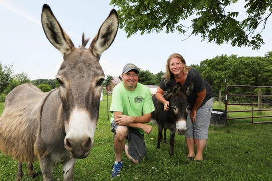 Shawn and Katie Brown run Sweet Meadows Farm, an organic farm near Roseville, with some help from minature donkeys Peggy, left, and Millie.