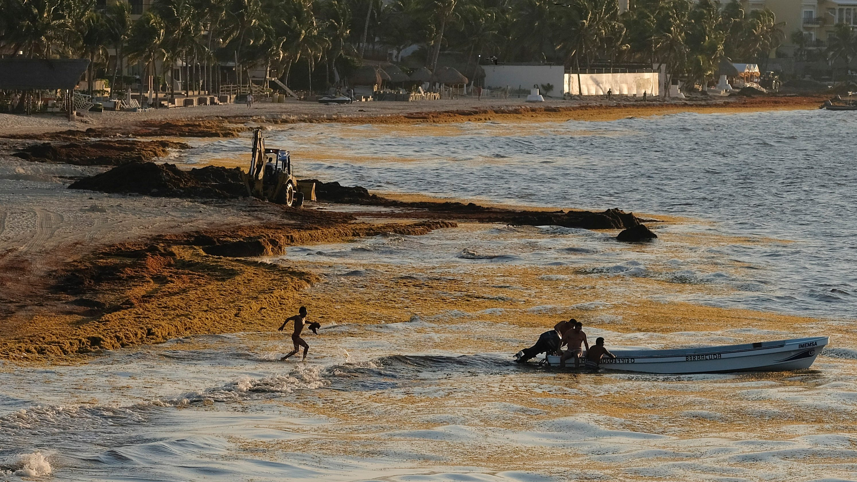 Mexico beaches: Country struggles to solve seaweed invasion