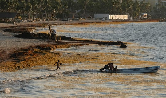 In this May 8, 2019, file photo, sargassum seaweed fills the shore where fishermen push their boat to sea in Playa del Carmen, Mexico. Mexico has spent $17 million to remove over a half-million tons of sargassum from its Caribbean beaches.