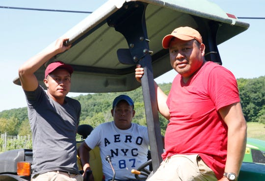 From left, Eddie, Santos and Hector Socorec pose for a photo on a tractor at Millbrook Vineyards on June 28, 2019. The Socorec brothers have been working at the vineyard on H-2A visas, supporting families back home in Guatemala.