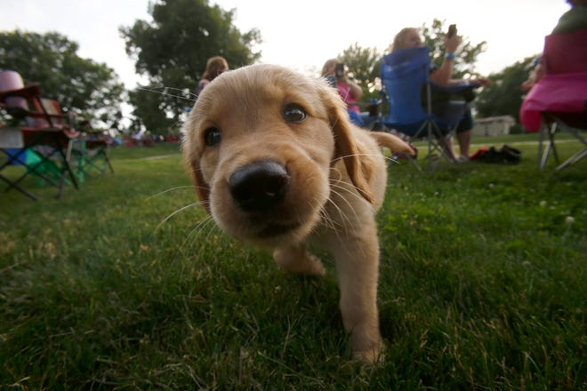Ankeny's Dog Park remains open. But residents are asked to use caution during the COVID-19 outbreak.