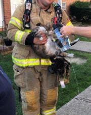 A cat that was saved from a Toms River fire and given CPR by firefighters is shown being given water at the scene.