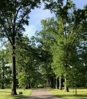 The Arlington Memorial Gardens was founded in 1934 and covers 165 acres.