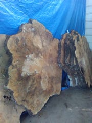 Paul Bontrager found these extraordinarily large pieces of burl wood that were available through the wood shop.