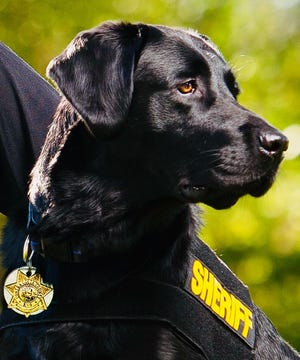 """""""Dug"""" is one of Jordan Detection K9's electronic detection dogs. The Cascade County Sheriff's Office will get its own electronic detection dog later this year."""