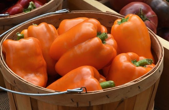 To be introduced in 2020, Orange Marmalade sweet pepper quickly turns from green to sweet and flavorful orange.
