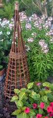 Rustic willow obelisk.