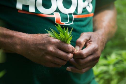 Growing Power founder Will Allen now grows hemp, sells CBD