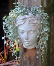 Athena head planter.