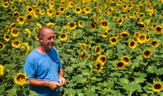 Todd Sheridan keesp an eye on things in his Sunflower Field near Autaugaville, Ala., on Monday July 1, 2019. The field, owned by the Sheridan family is open to visitors free of charge.