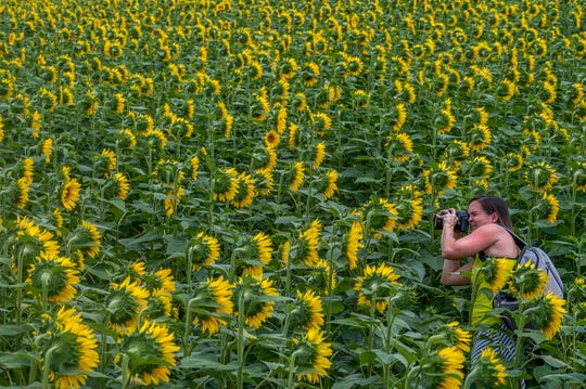 Photographer Rachel Callahan takes photos in The Sunflower Field near Autaugaville, Ala., on Monday July 1, 2019. The field, owned by the Sheridan family is open to visitors free of charge.