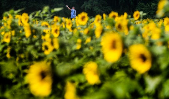 Visitors take photos in The Sunflower Field near Autaugaville, Ala., on Monday July 1, 2019. The field, owned by the Sheridan family is open to visitors free of charge.