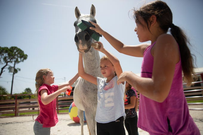 Track to Trail Inc. summercamp participants, Julia Tirado, 8, left, Layla Smith, 10, Sophia Solimini, 9, and Zoey Elia, 8, right, brush Maluj, after his training session, June 26, 2019, at Track to Trail Inc. Thoroughbreds in North Naples.