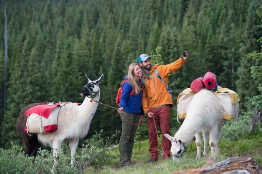 Vail to Aspen, Colorado, llama treks are available in July and August from Paragon Guides.