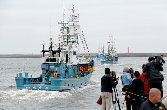 Whaling boats leave a port in Kushiro, Hokkaido, northern Japan on Monday, July 1, 2019. Japan is resuming commercial whaling for the first time in 31 years, a long-cherished goal seen as a largely lost cause.