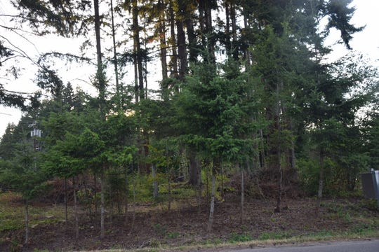 """The Bainbridge Island Fire Department has an example of a """"defensible space"""" at the corner of Madison and Highway 305."""