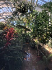 The Conservatory, located on Miami University's Hamilton campus, has housed the iboga tree since it first opened in 2005.