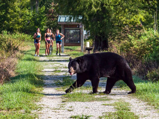 Carol Levengood and her husband, John Levengood of Fort Myers were walking along a trail at Rookery Swamp off Immokalee Road in Naples on June 15. On the trail with them were members of the Gulf Coast High School girls cross country team.