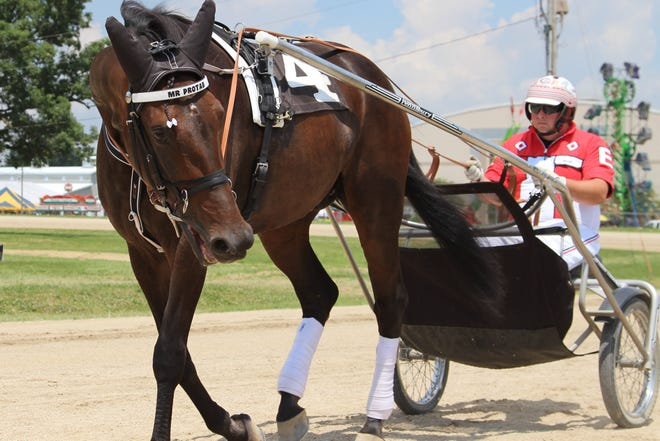 Russell Earley III guides Mr. Protab off the race track during a practice session at an earlier Marion County Fair. Harness racing will be featured as matinees Monday and Tuesday at 11 a.m.