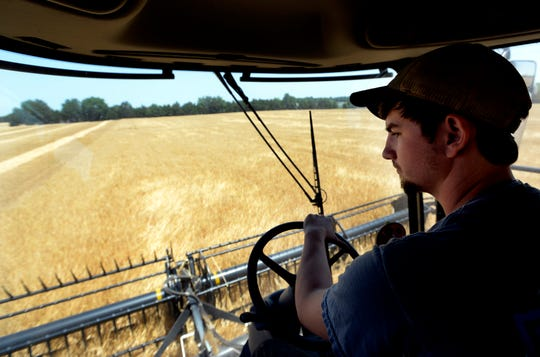 Jared Vance, crop specialist, operates a combine as he harvests barley at Batey Farms on Monday, June 3, 2019, in Murfreesboro, Tenn. The Batey Farm owned and managed by Brandon Whitt, is trying to bring barley production back to Tennessee so local brewers and distillers can use the Tennessee grown grain in the beer and spirits. Whitt's goal is to open a malting facility that can accommodate millions of pounds of malted barley. Whitt also hopes to encourage other Tennessee famers to plant barley and bring new income to the state.