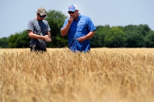 Jared Vance, crop specialist, left and Batey Farms owner and manager Brandon Whitt check the barley before harvesting on Monday, June 3, 2019, in Murfreesboro, Tenn.