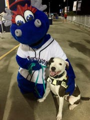 Koop'R, a certified search and rescue dog, served as the 'spokesdog' for Steps for Autism. Prior to his move to Maryland, Koop'R attended many events at the Blue Wahoos stadium, including games, walks and fundraisers.