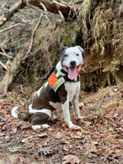 Koop'R, a certified search and rescue dog, is competing for the title of 2019 American Hero Dog.