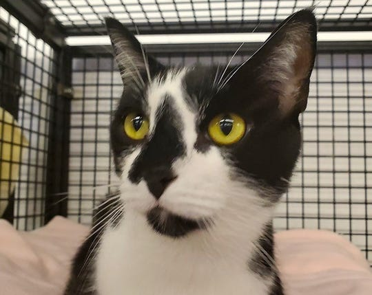 Souffle is available for adoption at 11129 Michigan Ave. in Youngtown. For more information, call 623-876-8778.