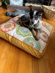 Susan Deninger saw a picture of the dog she adopted, Cleo, while scrolling her Facebook feed. The Wappingers Falls resident adopted the dogfrom Compassionate Animal Rescue Efforts of Dutchess County.