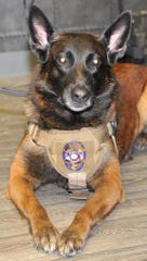 Wichita Falls police canine Turko received his new police badge Tuesday morning after the Wichita Falls Citizen Police Academy Association raised money through T-shirt sales to buy it.