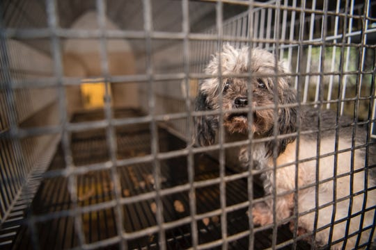 Royal Oak pet stores banned from selling dogs, cats: Here's why